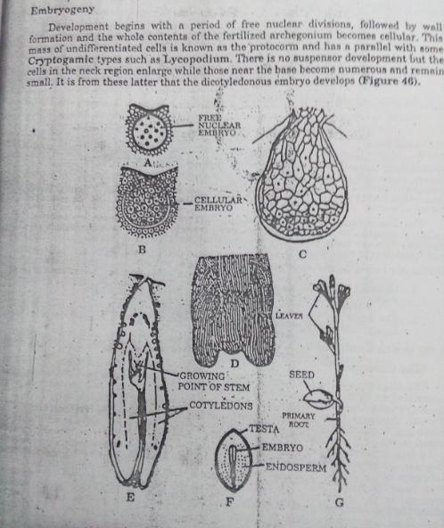 botany-brilliant-tutorials-for-upsc-and-ifs-examination