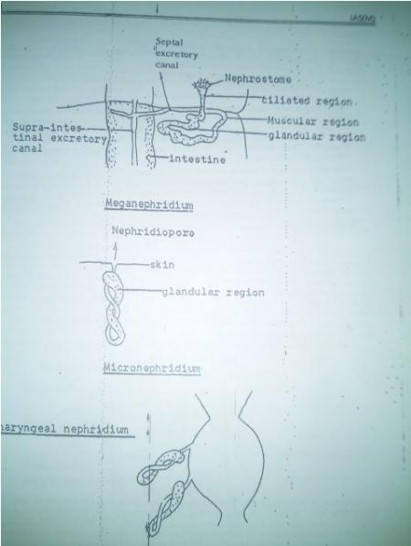 zoology-printed-notes-brilliant-tutorials